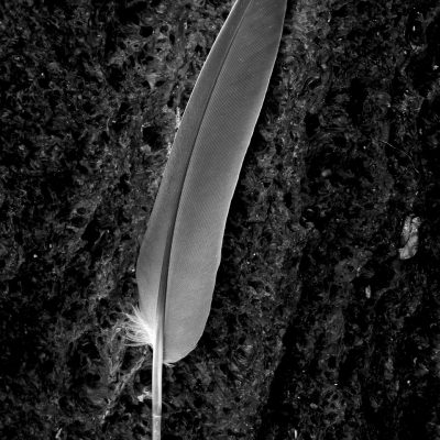 A Feather's Touch