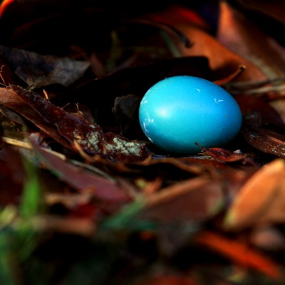 Robin's Lost Egg