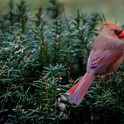 The Cardinal Eye