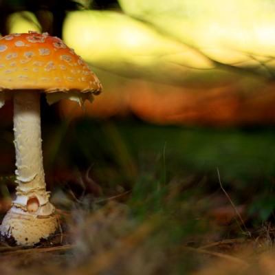 Mushroom Inn