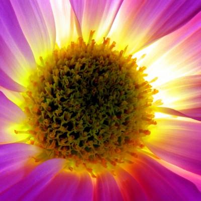 Flowernova